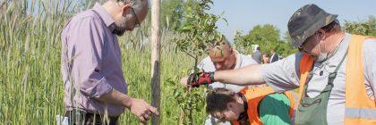 Pflanzaktion - Obstbaumalleen zurück in den Barnim Beitragsbild
